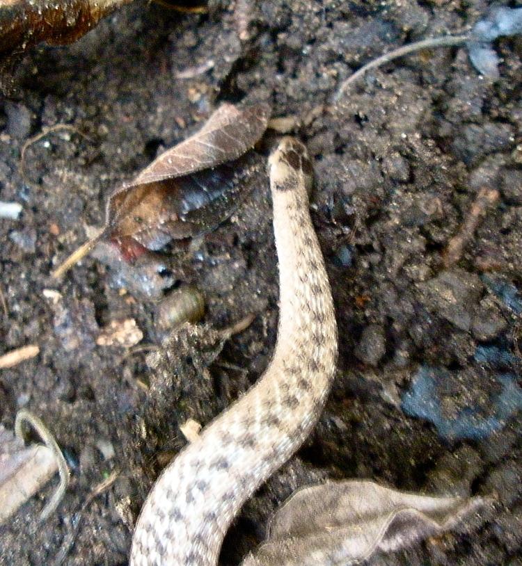 Mystery snake
