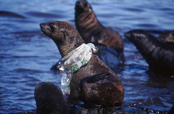 http://www.livescience.com/29577-plastic-pollution-in-antarctica-oceans.html