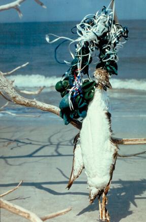 Death by ribbon: http://balloonsblow.org/photo-gallery/birddeadballoonribbon-4