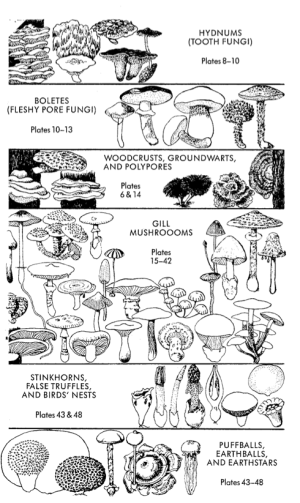 A First Page of Peterson's Field Guide to Mushrooms