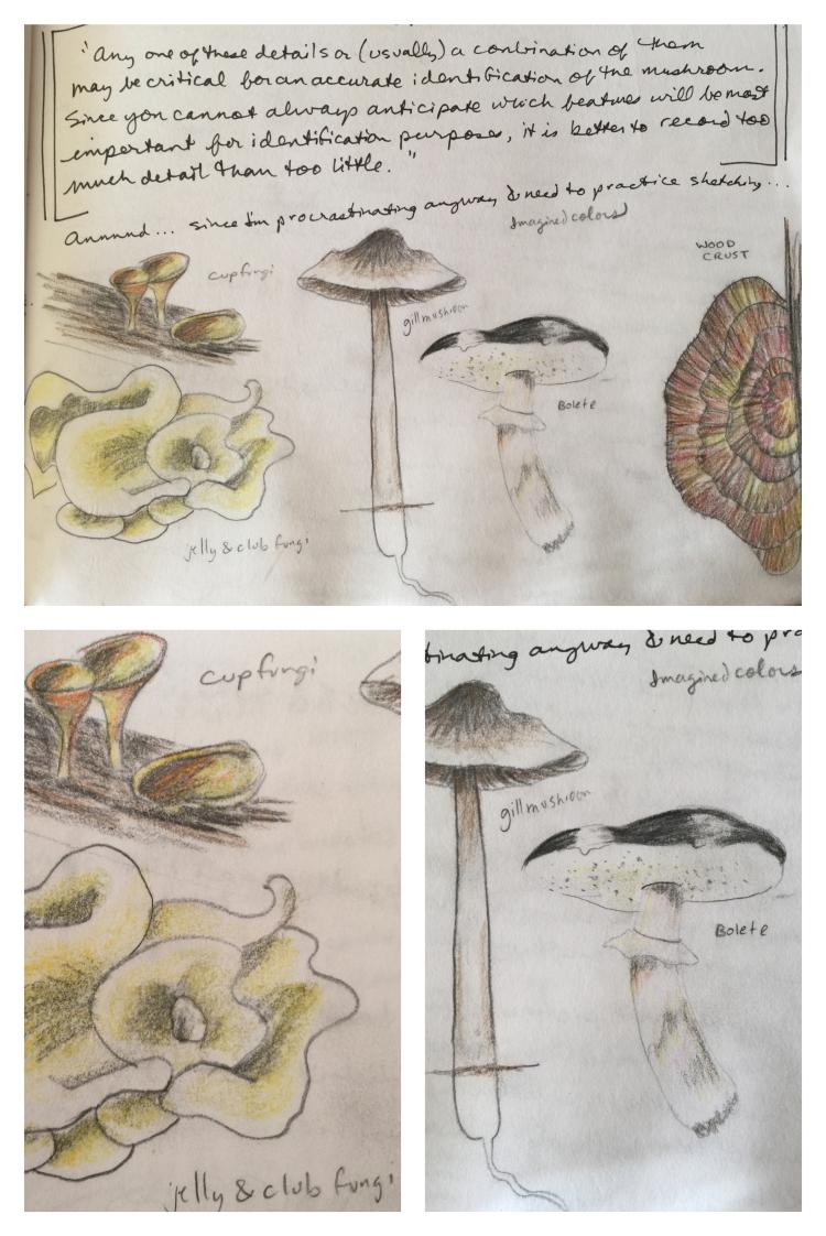mushroom sketches compilation